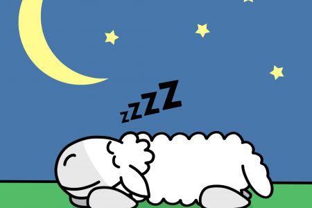 sheep-sleep.jpg